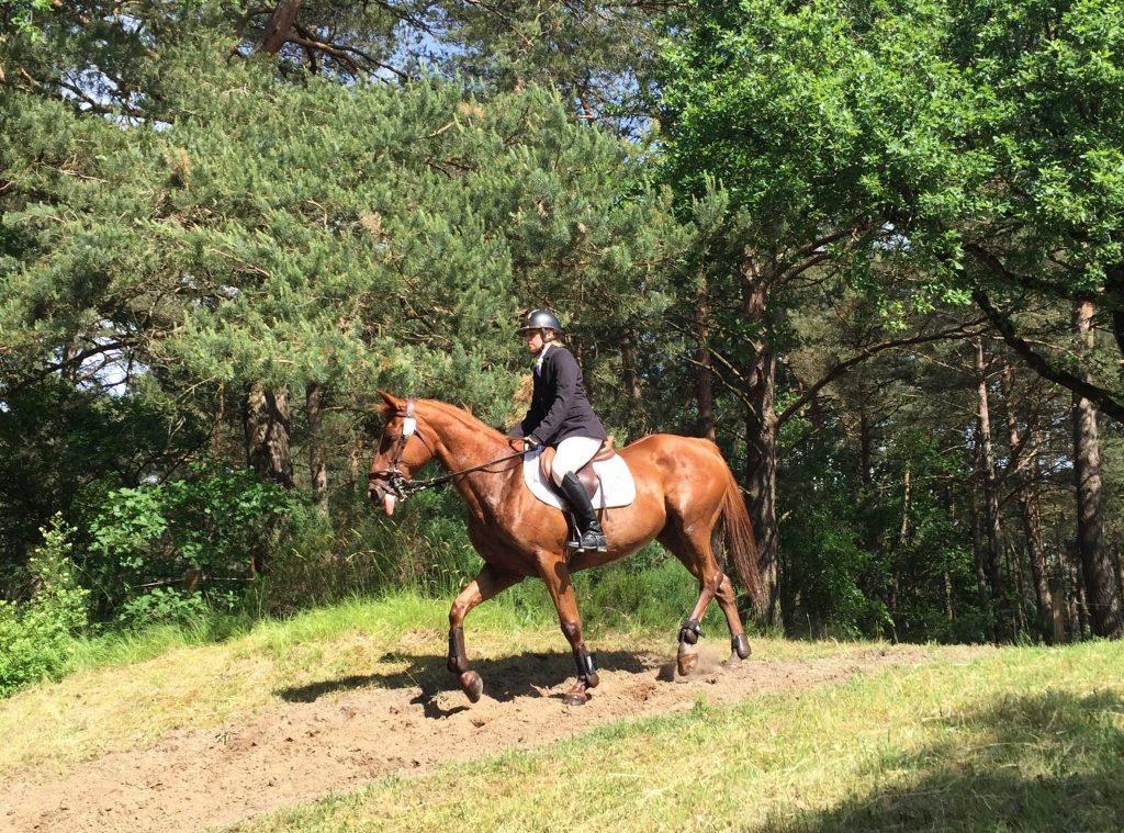 Hotchkiss et vénerie à Fontainebleau 2018