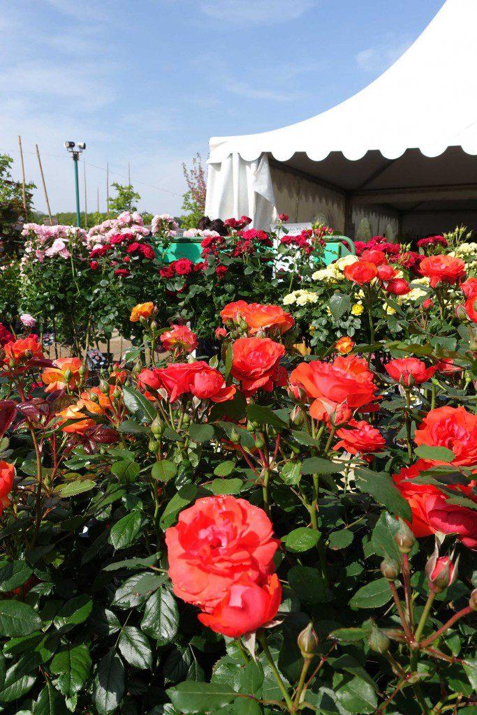 Foire aux rosiers Bellegarde 2019
